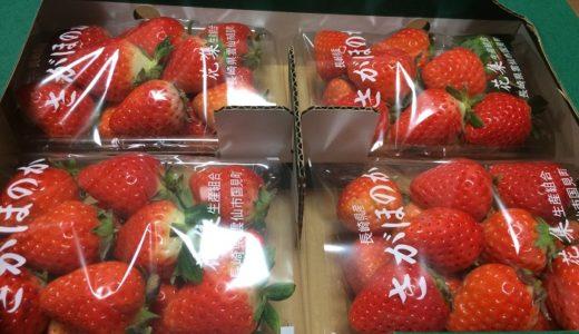 【ふるさと納税】「長崎県雲仙市」からイチゴが届きました