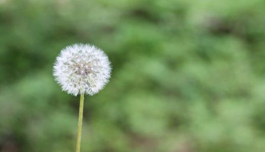 アレルギー検査メモ