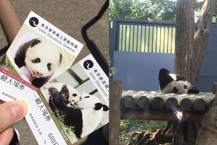 上野動物園で赤ちゃんパンダの「シャンシャン」を観てきた
