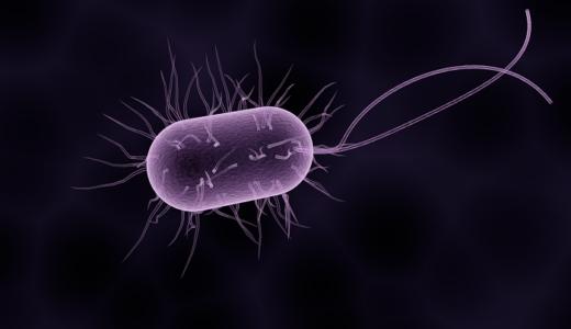 ピロリ菌メモ